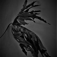 © Isara Alibaksh