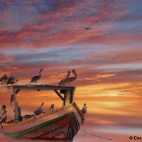 © Cecilia Papoonsingh